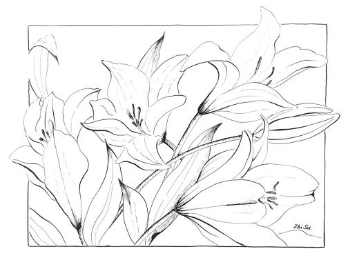 Lilies, ink pen