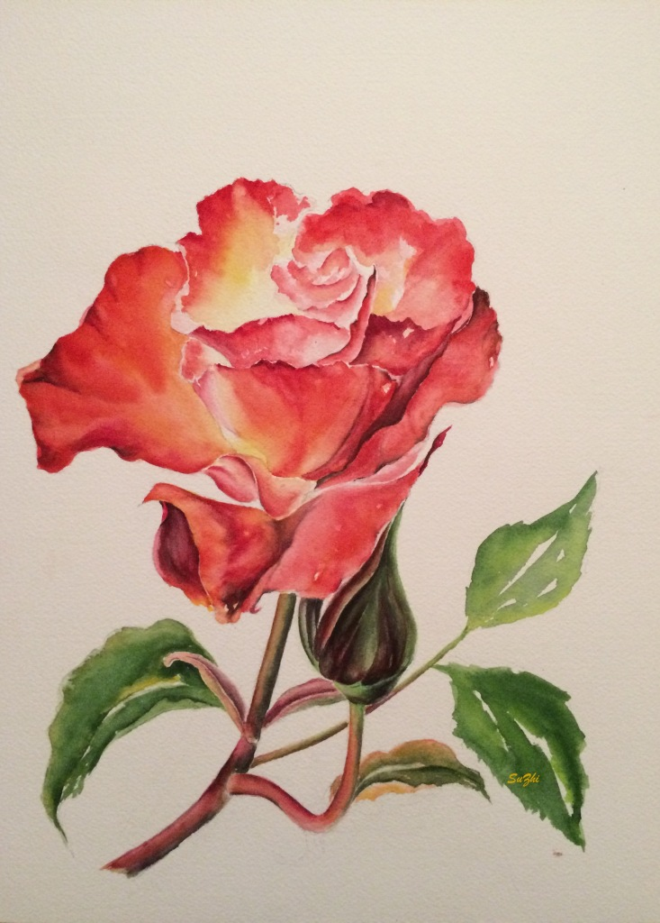Red rose, watercolor