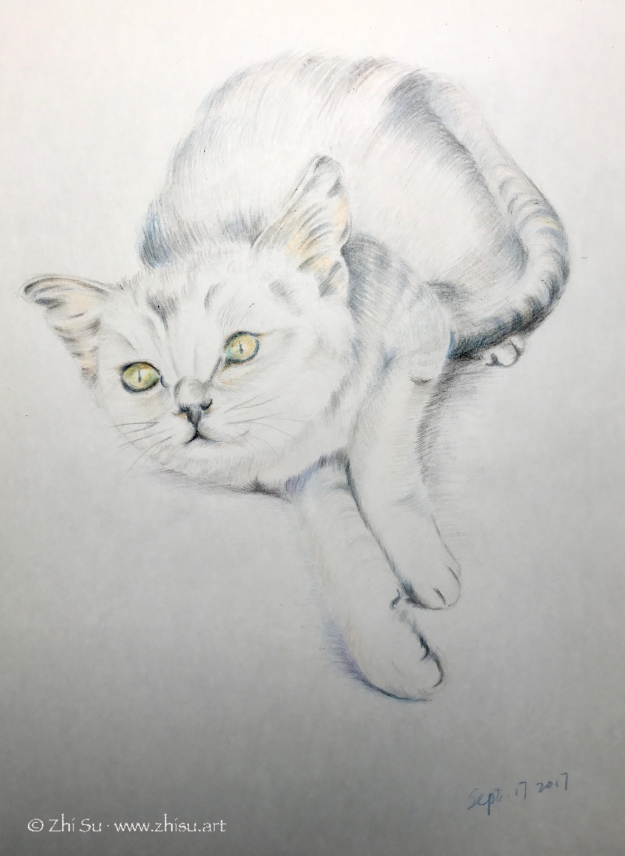 Kitty, colored pencil