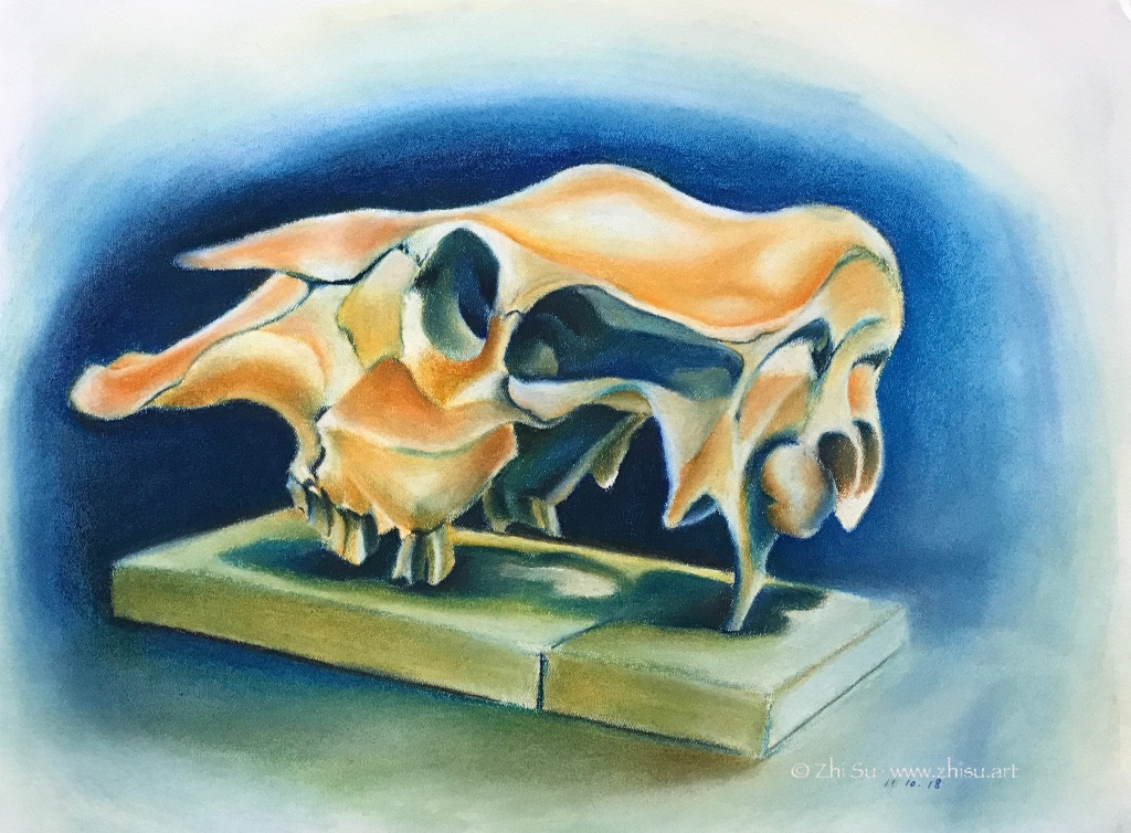 Pastel drawing of a horse(?) skull