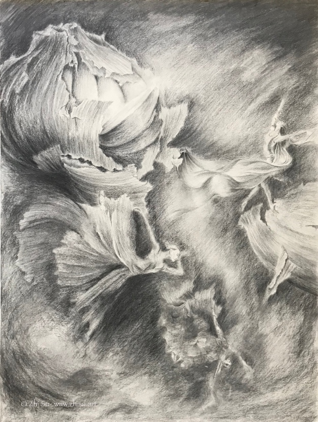 Garlic Dance, graphite on paper, 18 x 24 in, 2018